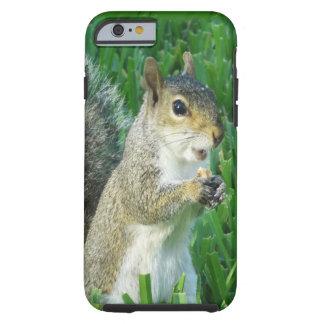 Niedlicher Eichhörnchen iPhone Fall für neues Tough iPhone 6 Hülle