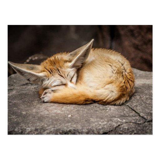 Niedlicher Fennec Fox Postkarten