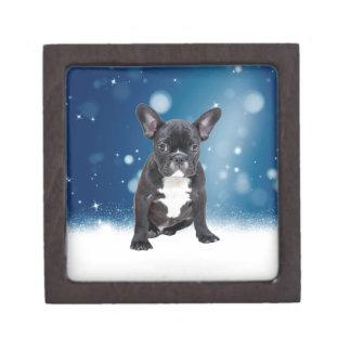 Niedlicher französische Bulldoggen-Schnee hat Schmuckkiste