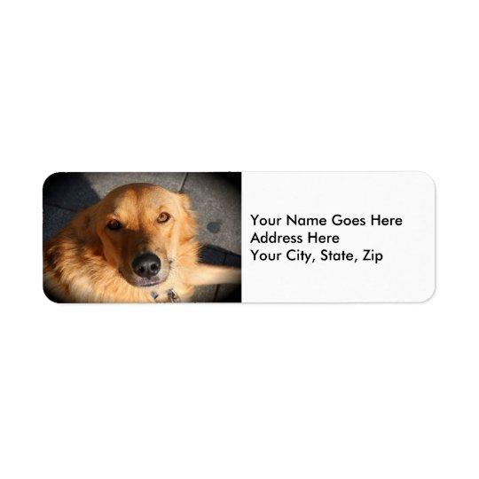 Niedlicher goldener Retriever-Hund Kleiner Adressaufkleber