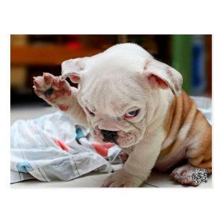 Niedlicher Gruß-englischer Bulldoggen-Welpe Postkarte