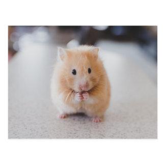 Niedlicher Hamster Postkarte