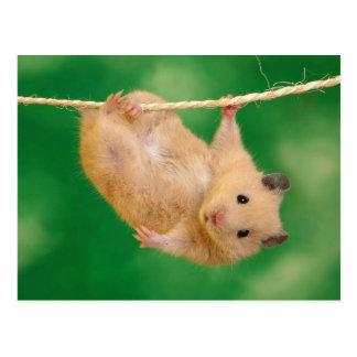 Niedlicher Hamster Postkarten