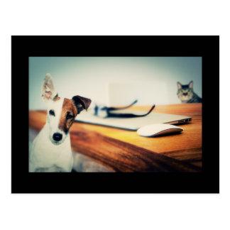 Niedlicher Hund und Katze in der Büro-Postkarte Postkarte