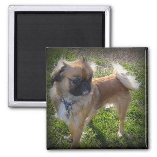 Niedlicher Hundemagnet Quadratischer Magnet