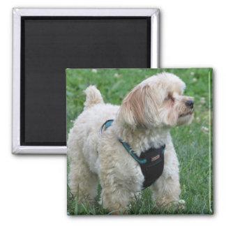Niedlicher Hundemagnet - verkupfern Sie das Quadratischer Magnet