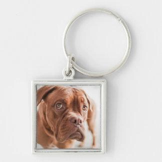 Niedlicher Hundeschlüsselchain 11 Silberfarbener Quadratischer Schlüsselanhänger