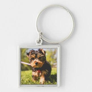 Niedlicher Hundeschlüsselchain 5 Silberfarbener Quadratischer Schlüsselanhänger