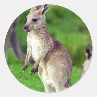 Niedlicher junger Känguru Runder Aufkleber