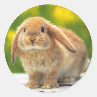 Niedlicher Kaninchenaufkleber Runder Aufkleber
