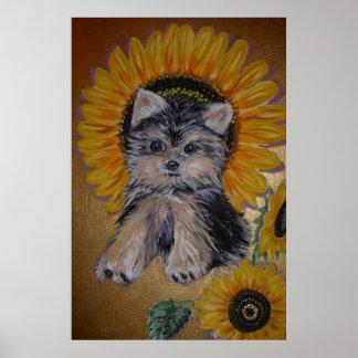 Niedlicher kleiner Hund und Sonnenblumen Poster