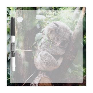 Niedlicher Koala-Bär, der in einem Baum sich Memoboard
