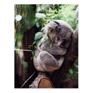 Niedlicher Koala-Bär, der in einem Baum sich Postkarte
