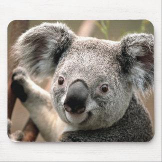 Niedlicher Koala-Bär Mauspads