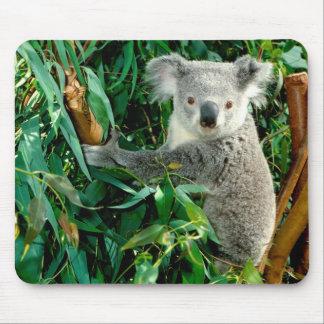 Niedlicher Koala-Bär Mousepads
