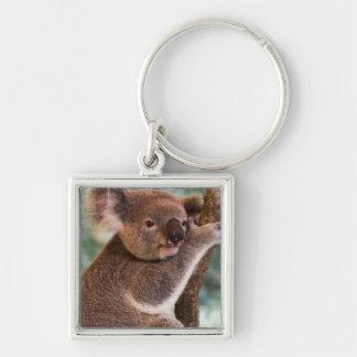 Niedlicher Koala Keychain Schlüsselbänder