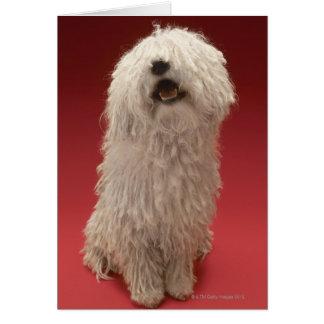 Niedlicher Komondor Hund Karte