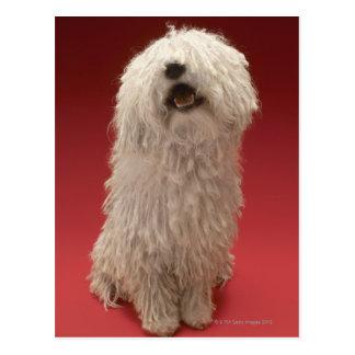 Niedlicher Komondor Hund Postkarte