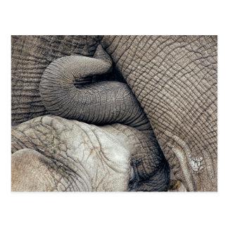 Niedlicher Krankenpflege-Baby-Elefant gestillt von Postkarte