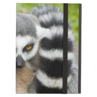 Niedlicher Lemur Stripey