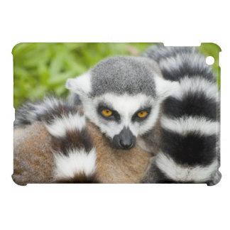 Niedlicher Lemur Stripey Hülle Für iPad Mini