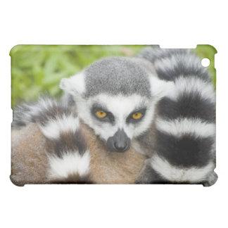 Niedlicher Lemur Stripey iPad Mini Hülle