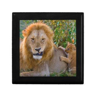Niedlicher Löwe CUB, das mit Vati, Kenia spielt Erinnerungskiste