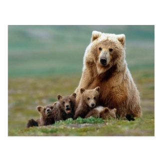 Niedlicher Muttergrizzly-Bär und ihr CUB Postkarte