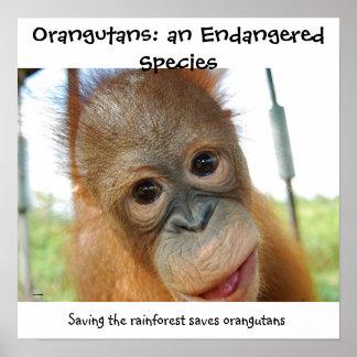Niedlicher Orang-Utan gefährdete Tier-Art Poster