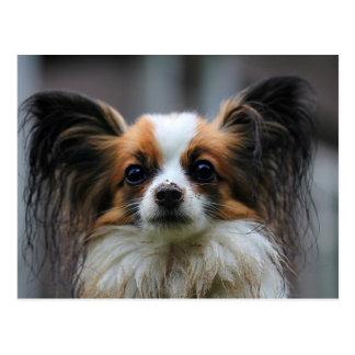 Niedlicher papillon Hund Postkarte