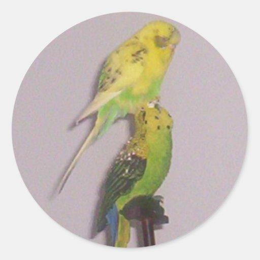 niedlicher Parakeet Sticker