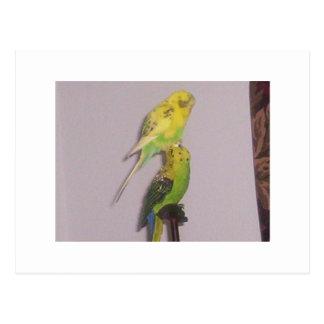 niedlicher Parakeet Postkarte