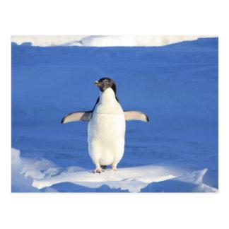 Niedlicher Penguin Postkarte
