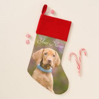 Niedlicher puppyeyed Ungar Vizsla Hundewelpe - Weihnachtsstrumpf