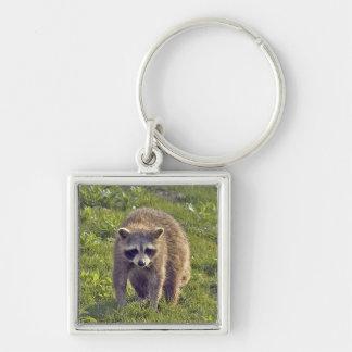 Niedlicher Raccoon Keychain Schlüsselband