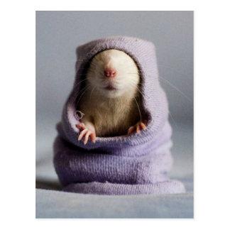 niedlicher Ratten-flüchtiger Blick ein Boo Postkarte