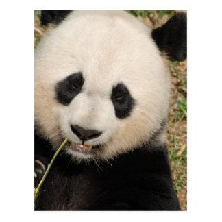 Niedlicher riesiger Panda-Bär Postkarte