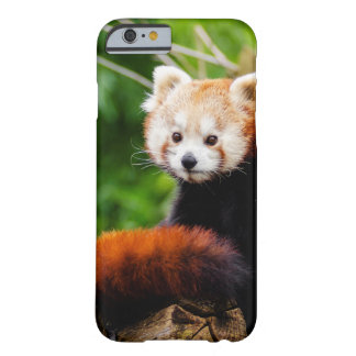 Niedlicher roter Panda-Bär Barely There iPhone 6 Hülle