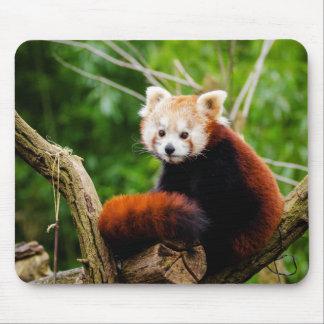 Niedlicher roter Panda-Bär Mauspad