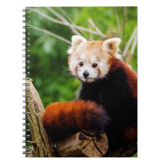 Niedlicher roter Panda-Bär Spiral Notizblock