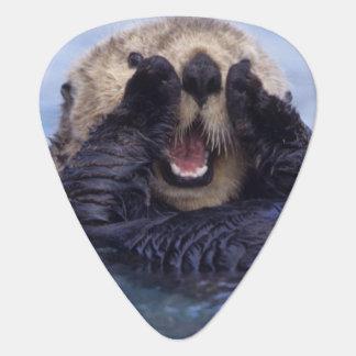 Niedlicher Seeotter | Alaska, USA Plektron