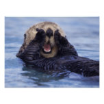 Niedlicher Seeotter | Alaska, USA Poster