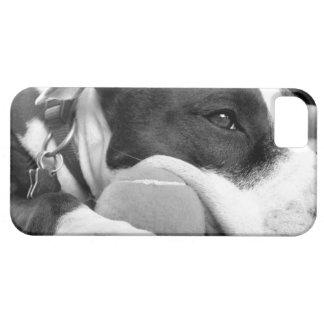 niedlicher trauriger schauender pitbull Hund iPhone 5 Hülle
