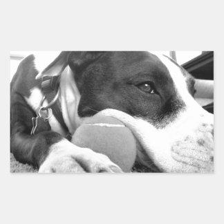 niedlicher trauriger schauender pitbull Hund Rechteckiger Aufkleber