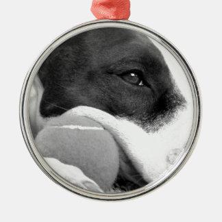 niedlicher trauriger schauender pitbull Hund Silbernes Ornament
