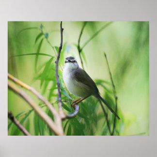 Niedlicher Wagtailvogel Poster