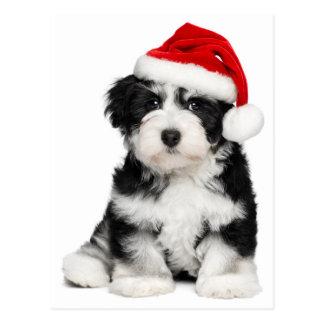 Niedlicher WeihnachtenHavanese Welpen-Hund 2 Postkarte