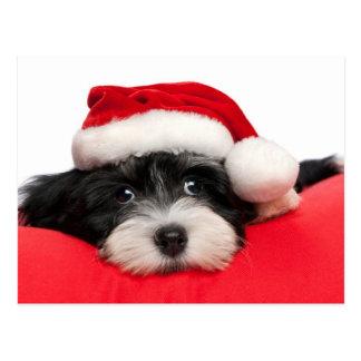 Niedlicher WeihnachtenHavanese Welpen-Hund Postkarte
