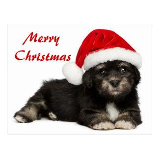 Niedlicher WeihnachtenHavanese Welpen-Hund Postkarten