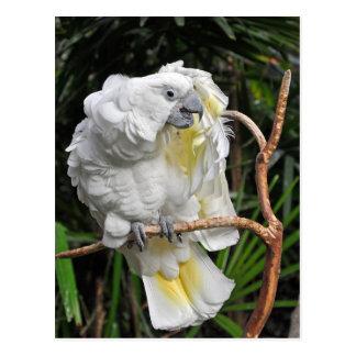 Niedlicher weißer Cockatiel Postkarte